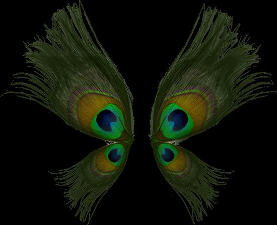 tubes_papillon_tiram_646