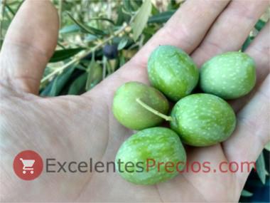 Cuándo se recogen las aceitunas, aceitunas verdes para comer, aceitunas para aliñar