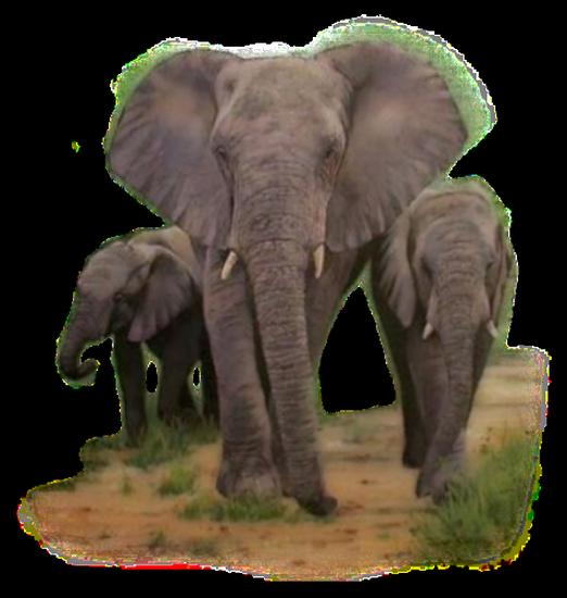 tubes_elephants_tiram_375