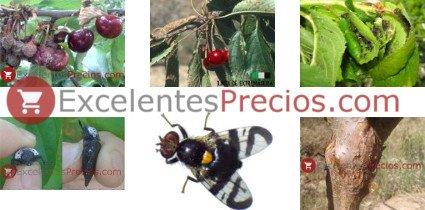 Plagas del cerezo, enfermedades del cerezo, foto enfermedades y plagas