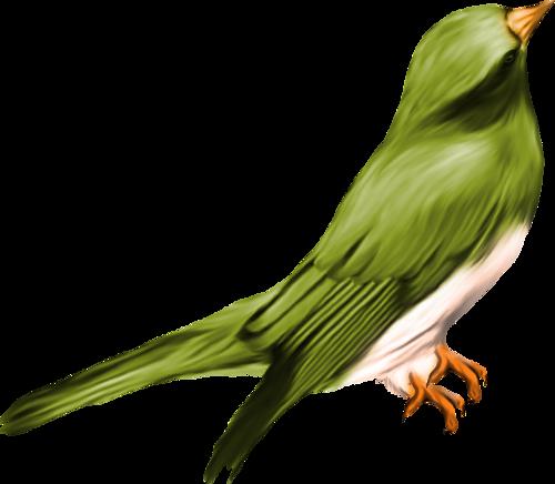 tubes_oiseaux_tiram_3