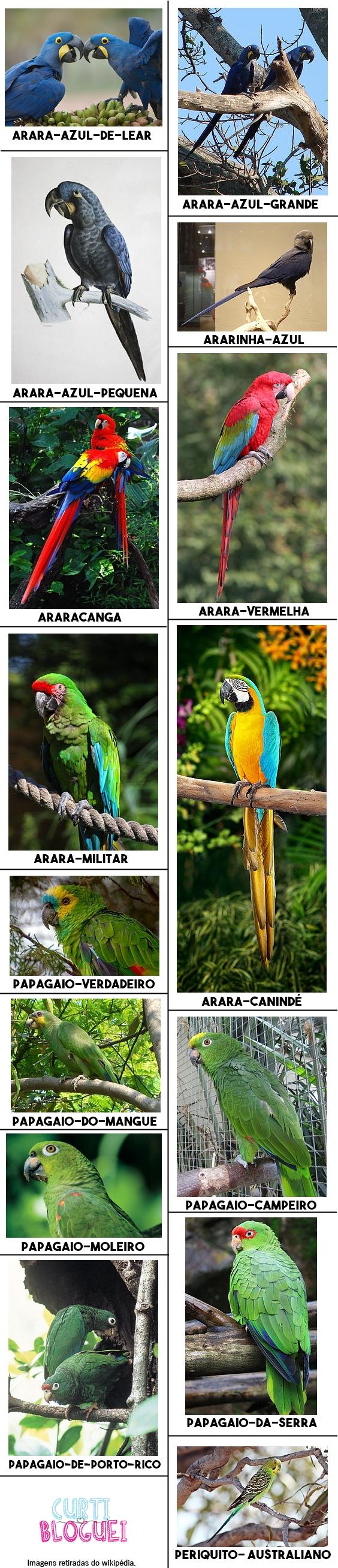 15-especies-de-araras-papagaios-periquitos