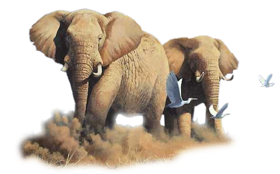 tubes_elephants_tiram_476