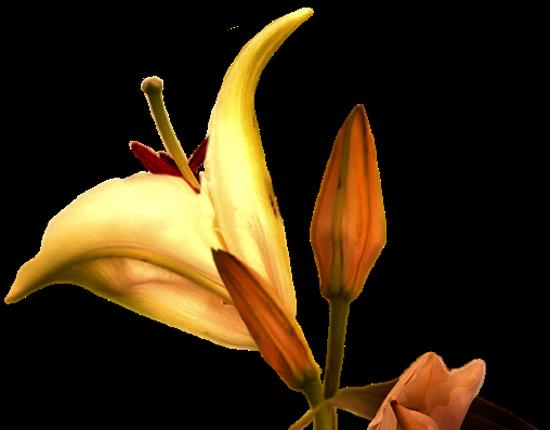 tubes_fleurs_tiram_370