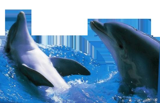 tubes_dauphins_tiram_91