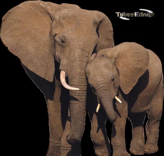 tubes_elephants_tiram_104