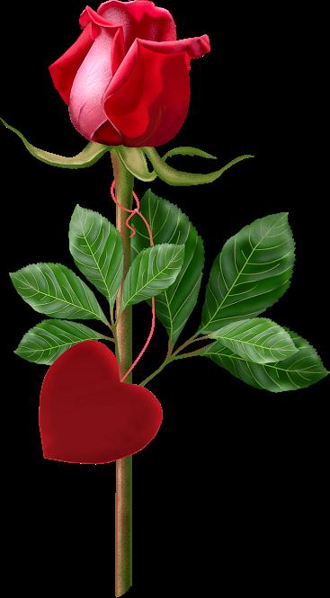 tubes_fleurs_saint_valentin_tiram_118