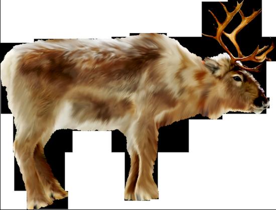 animaux-noel-tiram-83