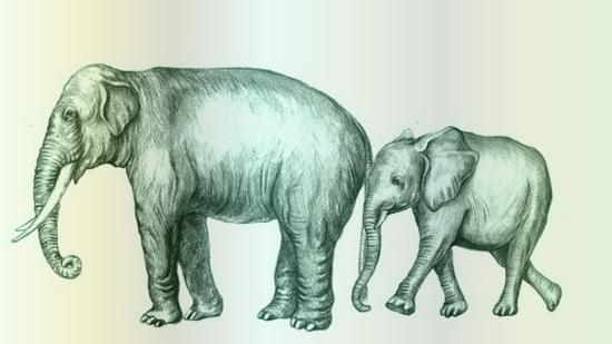 tubes_elephants_tiram_3