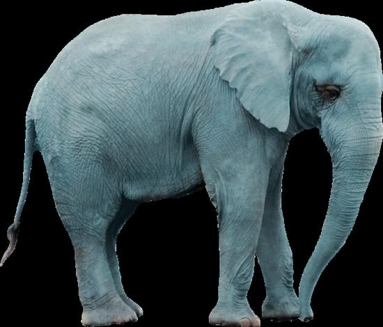tubes_elephants_tiram_232