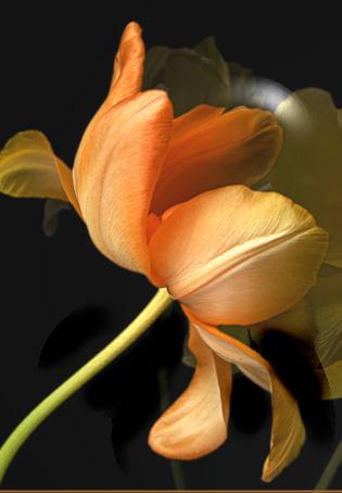tubes_fleurs_tiram_722