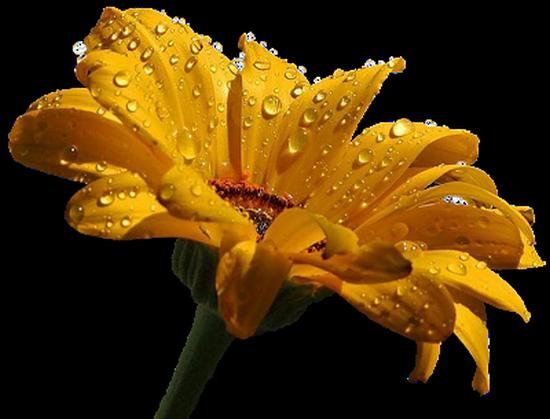tubes_fleurs_tiram_9