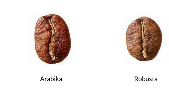 Ziarna arabiki i robusty różnice