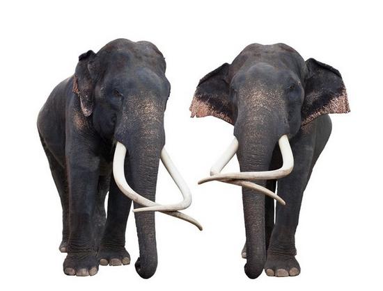 tubes_elephants_tiram_57