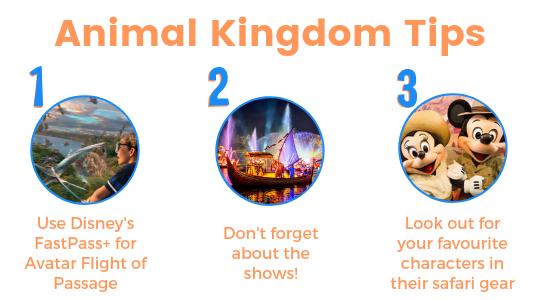 Animal Kingdom tips