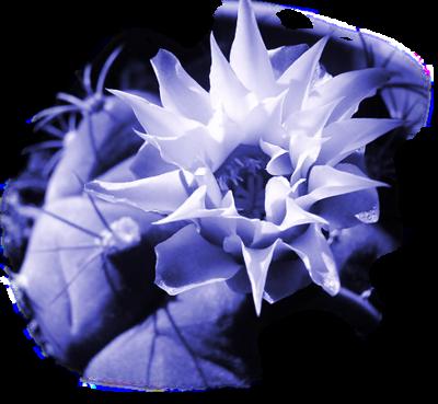 tubes_fleurs_tiram_709