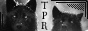 TPR_B_W_Button.png