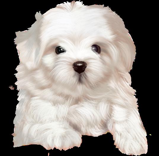 chien_tiram_174