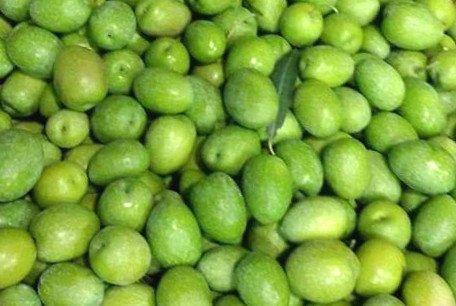 Giarraffa olive tree, Giarraffa olives