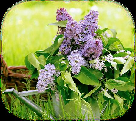 tubes_fleurs_tiram_866