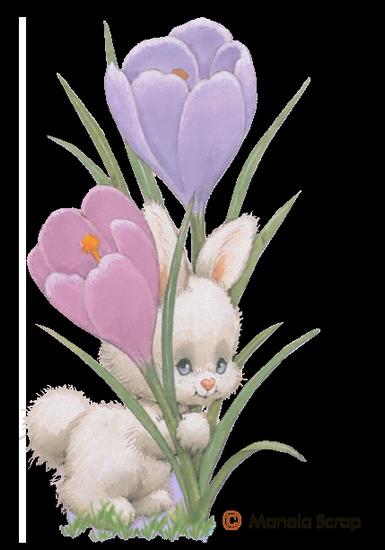 fleurs_paques_tiram_19