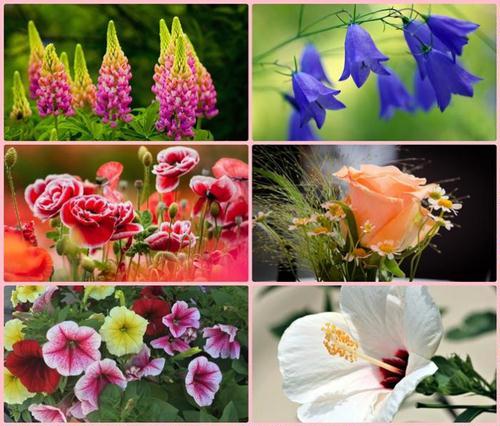 Tapety - Kwiaty