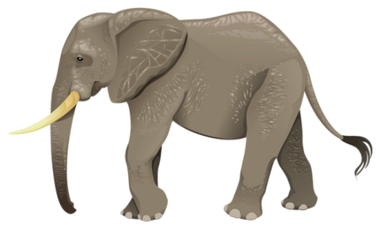tubes_elephants_tiram_252