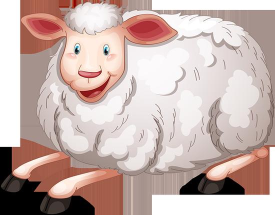 mouton_tiram_5