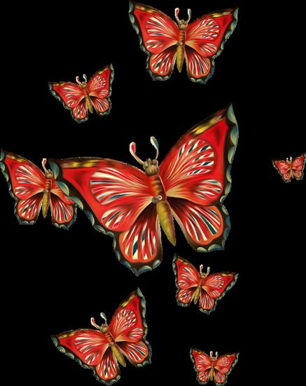 tubes_papillon_tiram_254