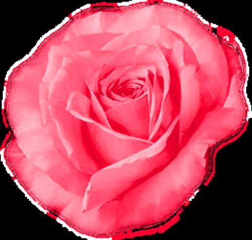 tubes_fleurs_saint_valentin_tiram_33