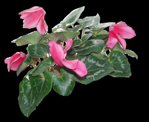 fleurs_paques_tiram_117