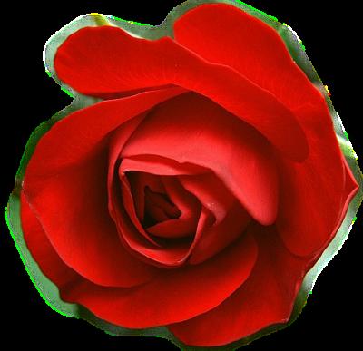 tubes_fleurs_tiram_917