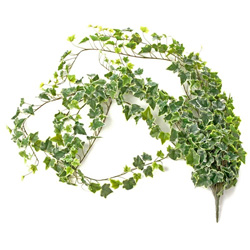 11a-ivy-bush-spray-garland-florist-flowers-corsage-creations-wedding