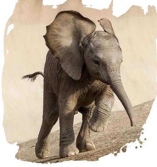 tubes_elephants_tiram_462