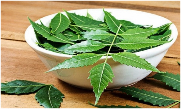 Prickly_Heat_Home_Remedies_Margosa_Leaves