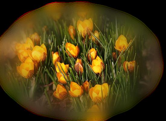 tubes_fleurs_tiram_302