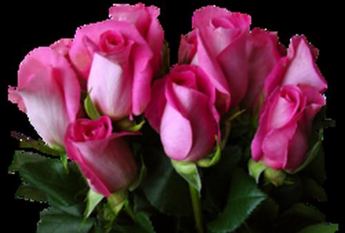 tubes_fleurs_saint_valentin_tiram_24