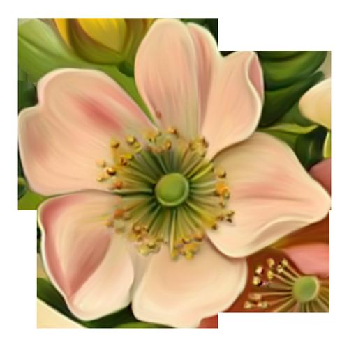 fleurs_paques_tiram_252