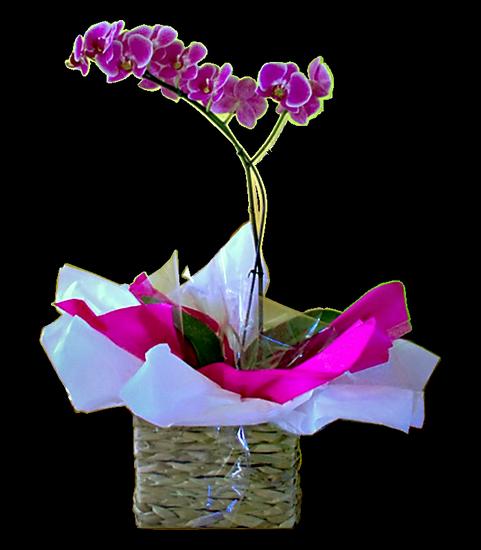 tubes_fleurs_tiram_486