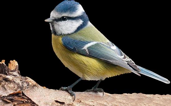 tubes_oiseaux_tiram_166