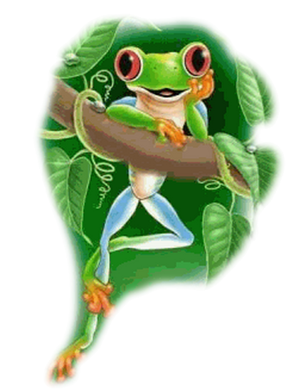 grenouille_tiram_16