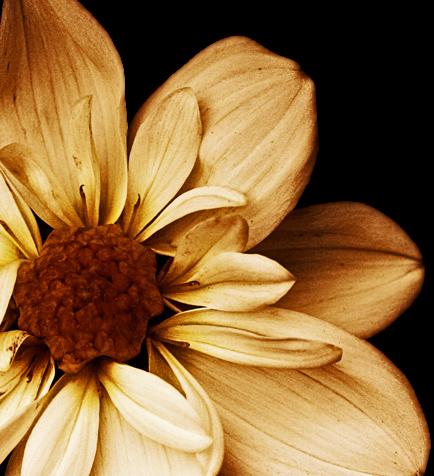 tubes_fleurs_tiram_921