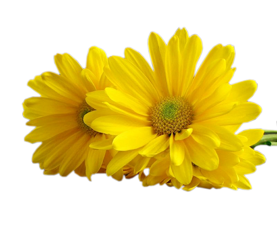 tubes_fleurs_tiram_207
