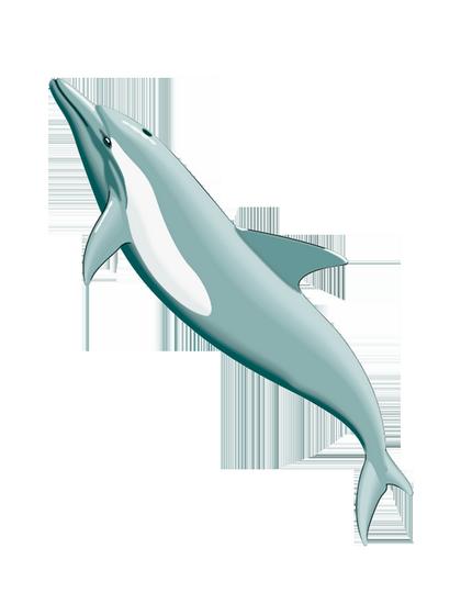 tubes_dauphins_tiram_97