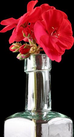 tubes_fleurs_tiram_834