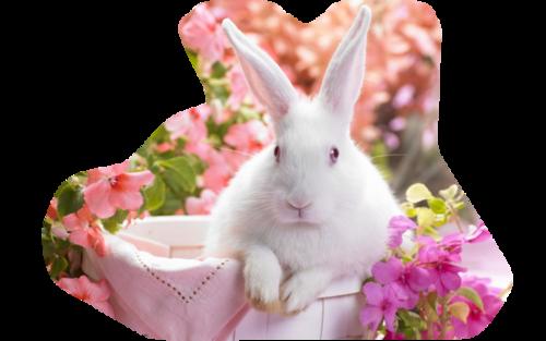 lapins_paques_tiram_799