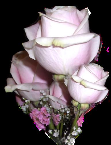 tubes_fleurs_tiram_759