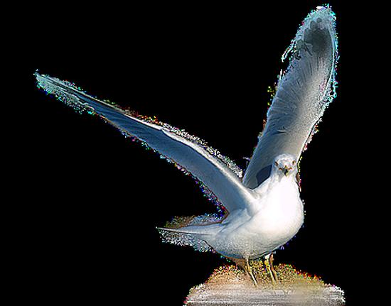 tubes_oiseaux_tiram_13