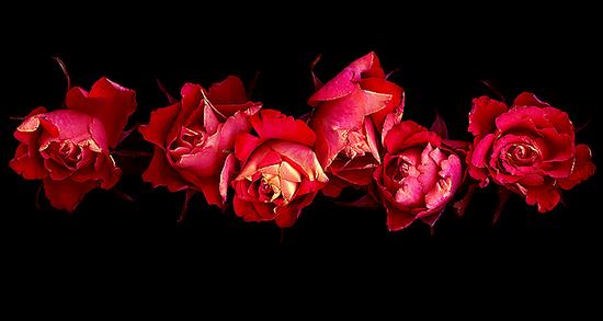 tubes_fleurs_tiram_210