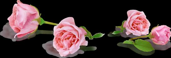 tubes_fleurs_tiram_20